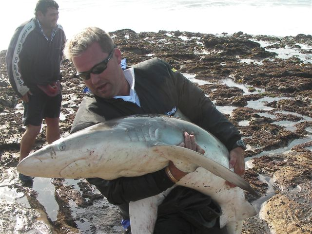 Dean Pretorius ESA and Shark